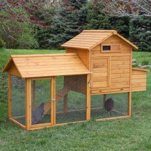 how to build chicken coop