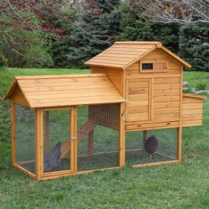 how to build chicken coop