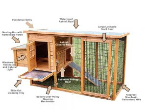 chicken coop outlook
